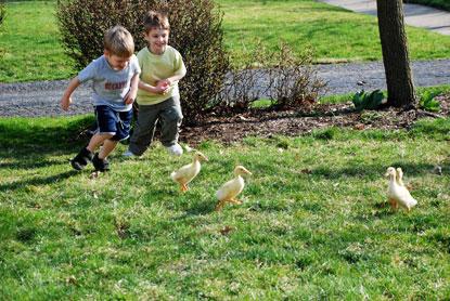 chicks3.jpg