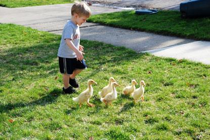 chicks6.jpg