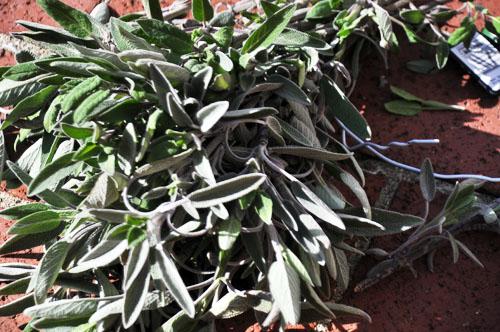 sage wreath003